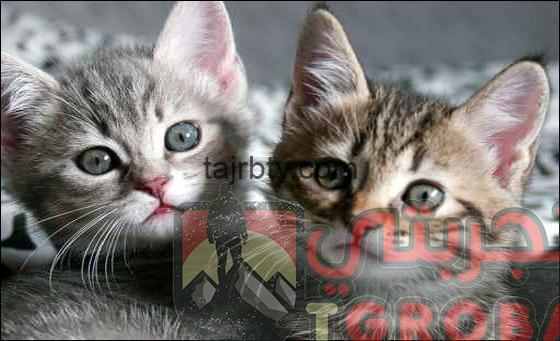Photo of تفسير رؤية القطط فى المنام