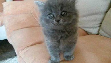 Photo of تجربتي مع تربية القطط