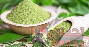 عشبة المورينجا جابر القحطاني فوائدها وطريقة استعمالها