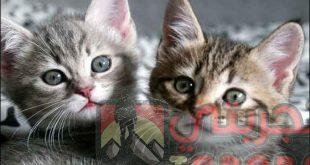 تفسير حلم القطط للمتزوجة