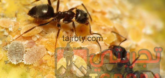 Photo of تفسير رؤية النمل في المنام