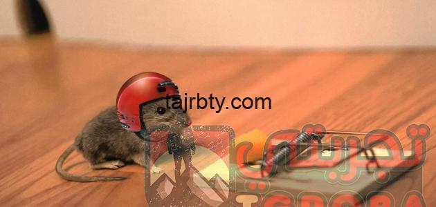 Photo of طريقة صيد الفئران