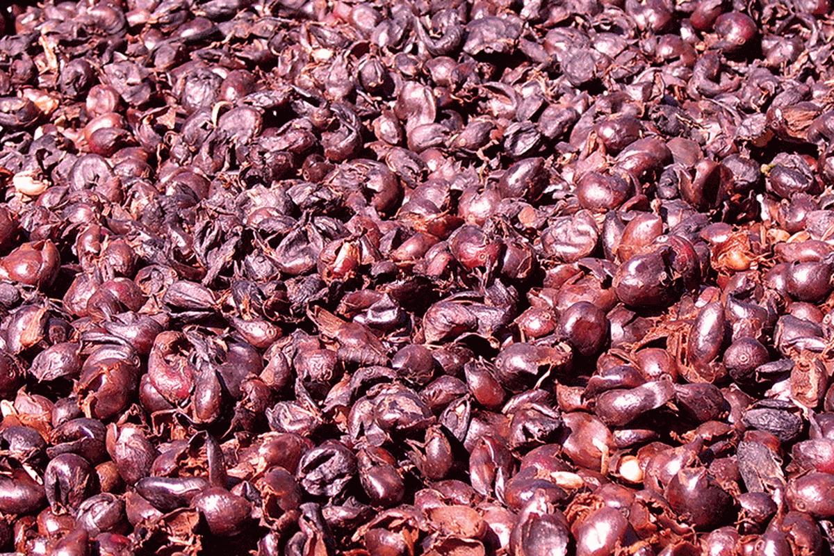 قشر القهوه للبطن عالم حواء