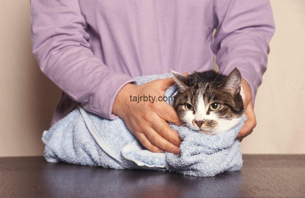 كيفية اعطاء الدواء للقطط