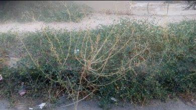 Photo of تجربتي مع عشبة القبار