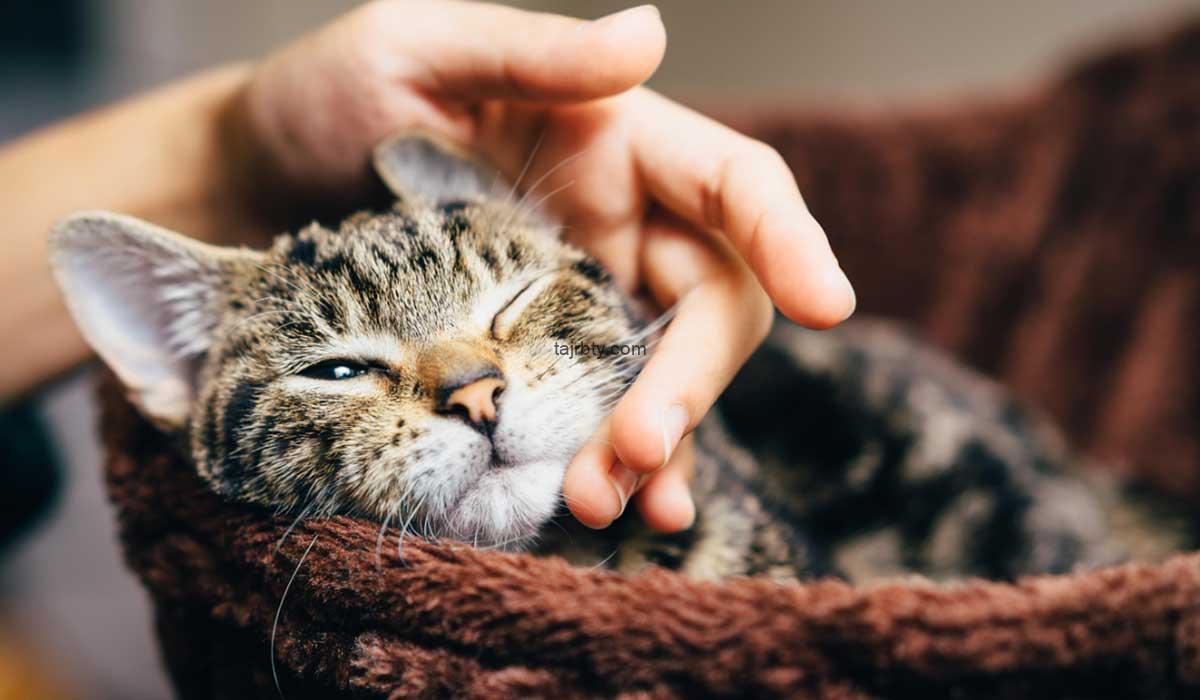 جدول مواعيد تطعيمات القطط وأسعار تطعيمات القطط 2021