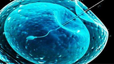 Photo of مين عملت تحديد نوع الجنين ونجحت