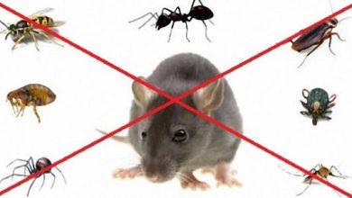 Photo of طريقة التخلص من الحشرات المنزلية بـ 5 طرق